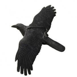Lokvogel vliegende Kraai Geflockt