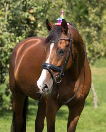 Verjaardagshoedje paard