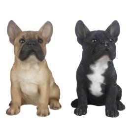 Franse Bulldog (zittend)
