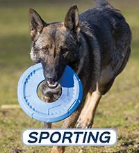 Sporting - Actief
