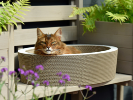 Cat-On Lovale basket