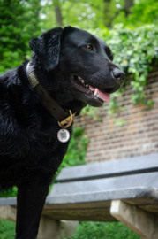 Spotted! Dog ID-tag