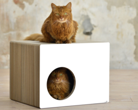 Cat-On Phredia Eckhaus