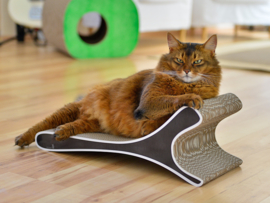 Cat-On Feline