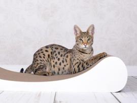 Cat-On Le Divan