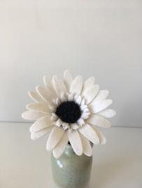 Gerbera wit/ Gerbera white
