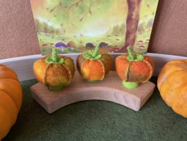 Jaarringsteker pompoen - Annual ring plug pumpkin