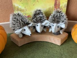 Jaarringsteker egel- Annual ring plug hedgehog