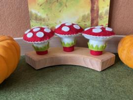 Jaarringsteker paddestoel - Annual ring plug mushroom