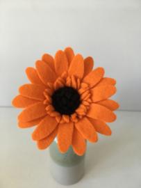Gerbera oranje/ Gerbera orange