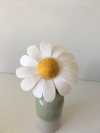 Margriet/ Daisy