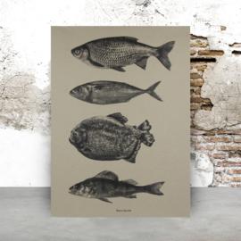 Fish | A2