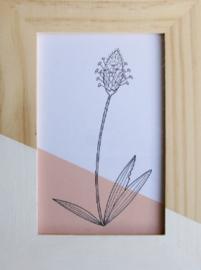 Barabrenda | Lijstje bloem roze