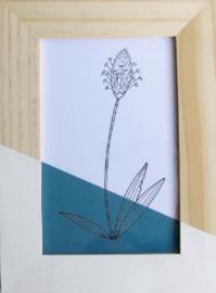 Barabrenda | Lijstje bloem blauw