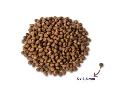 Renske | Kitten - Verse Kalkoen & Kip | 1,5kg