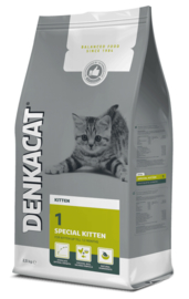 Denkacat | Special Kitten