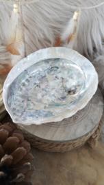 Abalone schelp 12-15cm