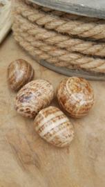 Aragoniet trommelsteen 20-35 gram
