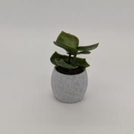 Plant VII