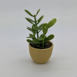 Plant VIII