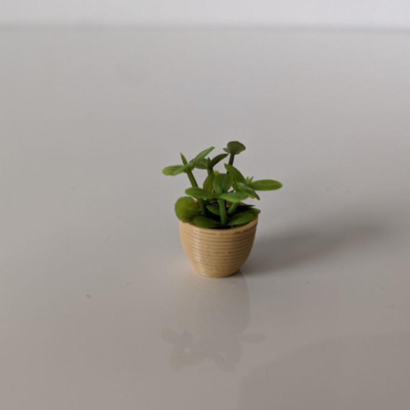 Plant VI