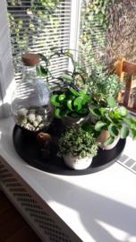 -miniblog- Ronde vormen in je interieur