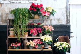 -miniblog- Planten in je interieur