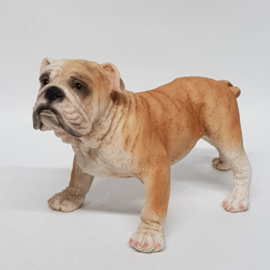 Engelse Bulldog beeldje polystone