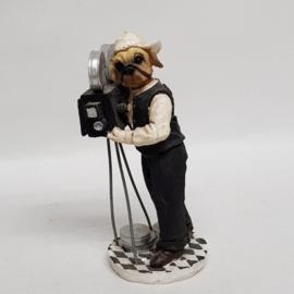 Engelse Bulldog filmend