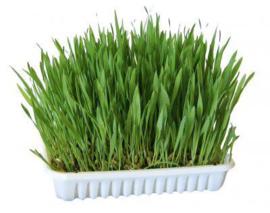 Heerlijk zelf kwekende knaagdieren gras