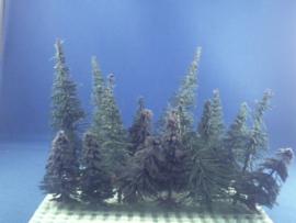 18x naaldboom diverse maten