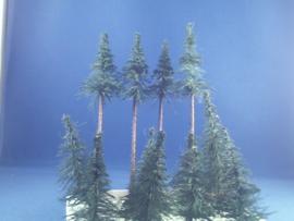12x naaldboom