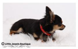 Leren halsband met hondenbotjes