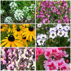 groeipapier 7,5 cm | aqua bloem | veldbloemen