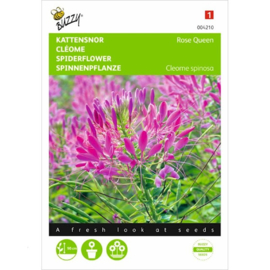 Cleome, Kattensnor Rose Queen