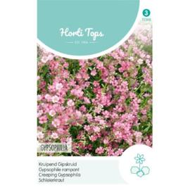Gypsophila, kruipend Gipskruid rose