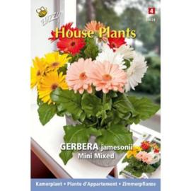 Buzzy® House Plants Gerbera mini gemengd