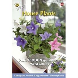 Buzzy® House Plants Platycodon, Ballonklokje gemengd