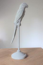 Parrot op voet