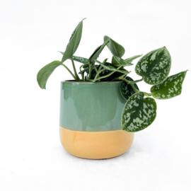 Minty pot (Medium)