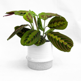 Freya pot (Medium)
