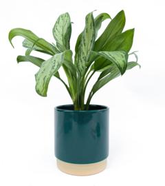 Ellie pot groen (Medium)