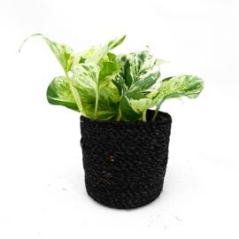 Onyx basket (Small)