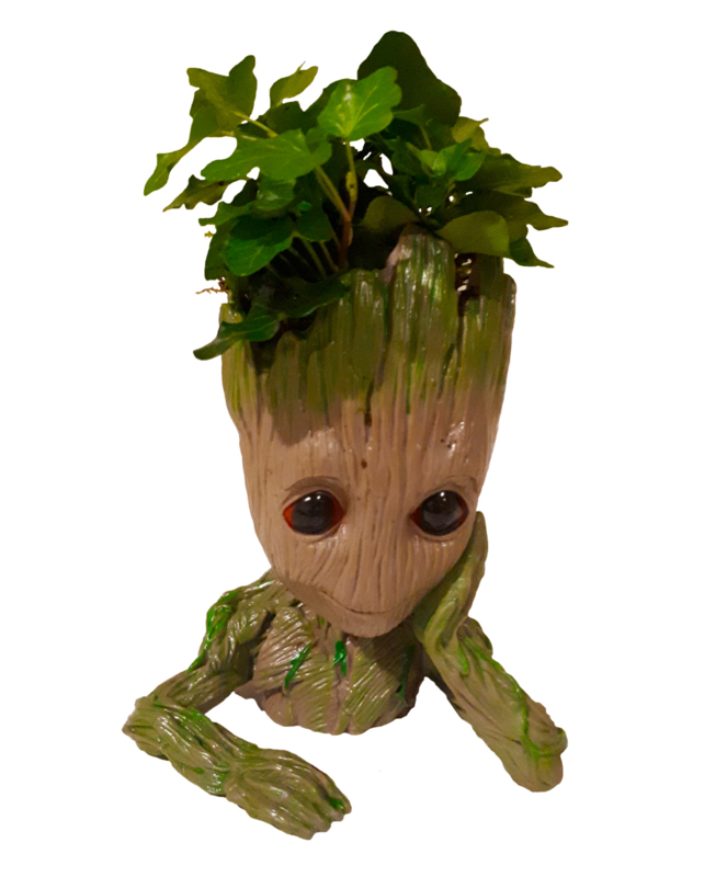 Baby Groot Met Echt Plantje