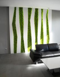 Design Moss
