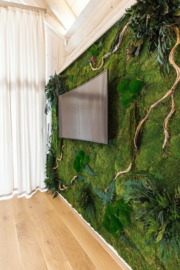 Moss Art Rain Forest