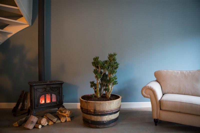 Alles over de Jadeplant - Crassula Hobbit