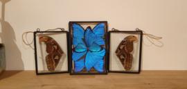 Schitterende vlindervleugels -Morpho blue-