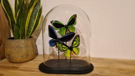 """Set vlinders """"Birdwings Green& Blue"""""""""""