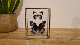 "Set vlinders ""Natural Blue small"""